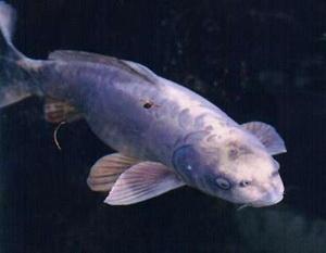 Разновидности рыб